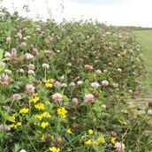 Pollen and Nectar (AB1)
