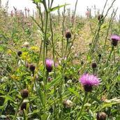 Species Rich Grassland (GS8)