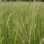 Grass Buffers and Field Margins (SW Codes)