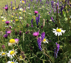 FS11: Acidic Soils Wildflower Mixture