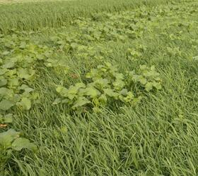 EnviroSeeds EcoCover Cover Crop Mixture
