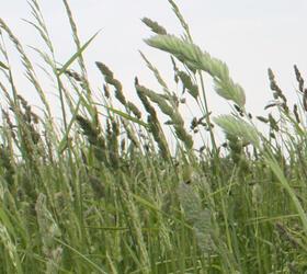 FS Species Rich Wild Grass Mixture (AB3)