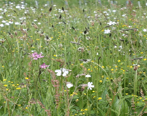 FS4 100%: Loam and Alluvial Soils Wildflower Mixture