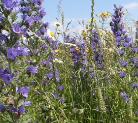 FSB 100%: Bee and Butterfly Wildflower Mixture