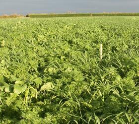 EnviroSeeds CatchMore Cover Crop Mixture