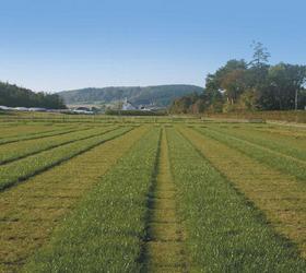 Bio Pasture