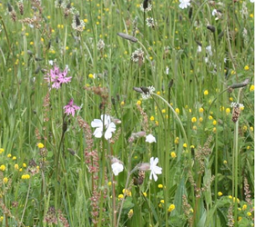 FS4: Loam and Alluvial Soils Wildflower Mixture