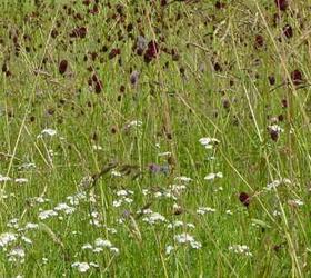FS14: Wild Bird Wildflower Mixture