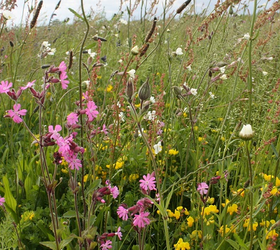 FSRE 100%: Restore and Enrich Wildflower Mixture