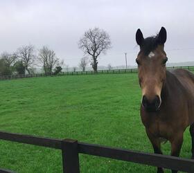 FS Classic Horse Paddock Grass Seed
