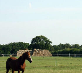 FS Economy Horse Paddock Grass Seed