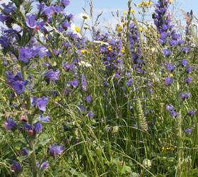 FS10 100%: Coastal Areas Wildflower Mixture