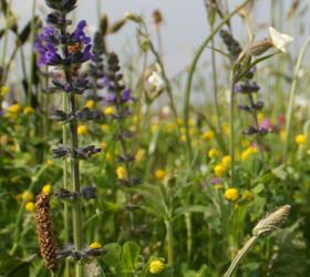 FS1 100%: General Purpose Wildflower Mixture