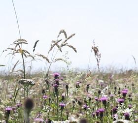 FS2 100%: Chalk and Limestone Soils Wildflower Mixture