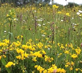 FS3: Dry, Sandy and Loam Soils Wildflower Mixture