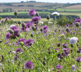 FS5 100%: Heavy Clay and Wet Soils Wildflower Mixture