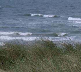FS Coastal Areas Grass Seed
