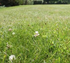 FS Eco-Clover Grass Seed