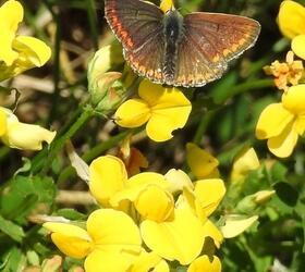 FS12: Low Growing Wildflower Mixture