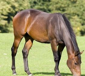Triple H Horse Paddock Grass Seed - with Ryegrass