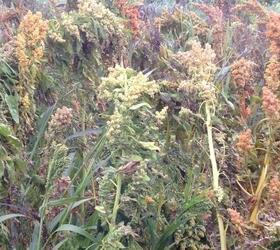 Organic Wild Bird Seed - Mix 1
