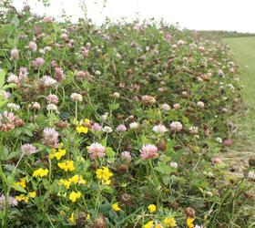 FS Premium Nectar Flower Mixture (AB1)
