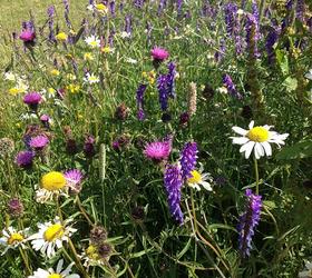 FS11 100%: Acidic Soils Wildflower Mixture