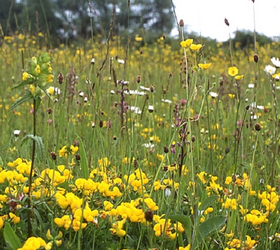 FS3 100%: Dry, Sandy and Loam Soils Wildflower Mixture