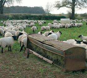 Late Lamb