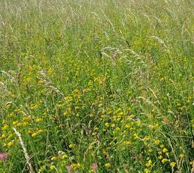 FS Wildflower Meadow Mix (AB8)