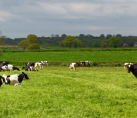 Overseeder - Cut and Graze Mix (with Clover)