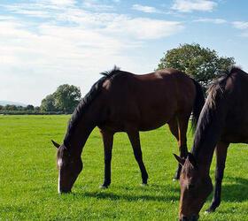 FS Premier Horse Paddock Grass Seed