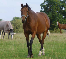 Triple H Horse Paddock Grass Seed - without Ryegrass